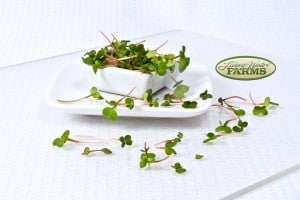 Living Water Farms Micro Greens Radish Pink Stem