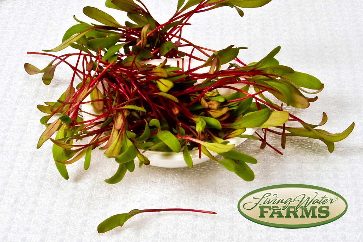 Living Water Farms Micro Greens Bulls Blood