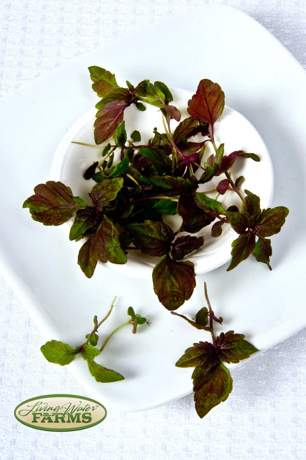 Living Water Farms Micro Greens Red Shiso