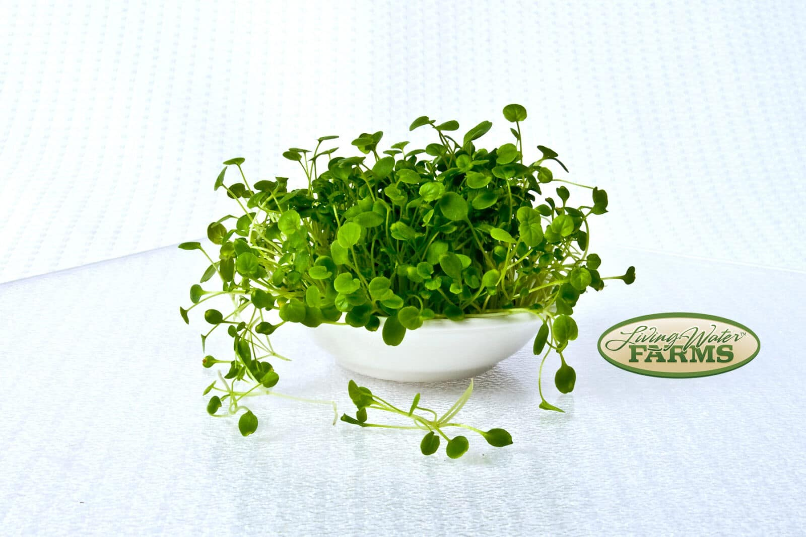 Living Water Farms Micro Greens Cress