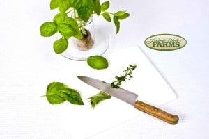 0070lwf basil italian lg leaf